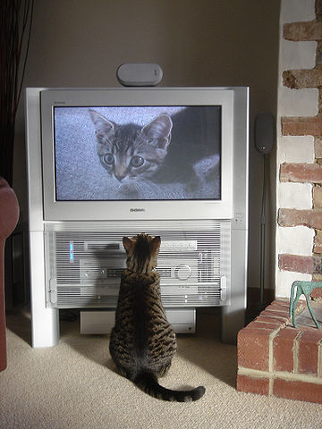 360px-Fatty_watching_himself_on_TV