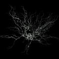 neuron-sem-2